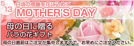 バラ切り花・花束