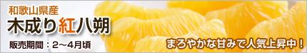 木成り紅八朔(べにはっさく)