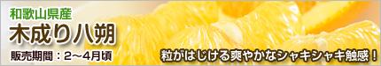 木成り八朔(はっさく)