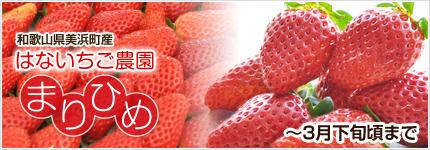 完熟イチゴ まりひめ 和歌山県美浜町産