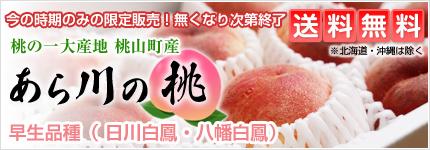 完熟桃 あら川の桃 桃山町 早生品種(日川白鳳・八幡白鳳)