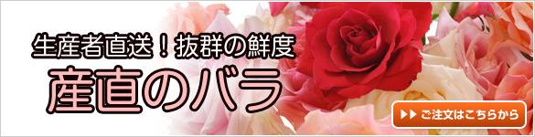 産直の新鮮なバラ