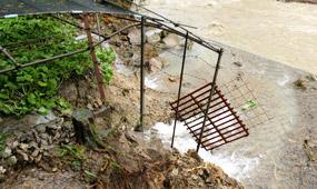 台風12号によるわさび田の被害