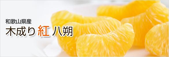 和歌山県産 木成り紅八朔(べにはっさく)
