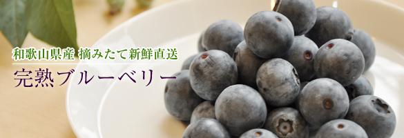 生ブルーベリー 和歌山県産