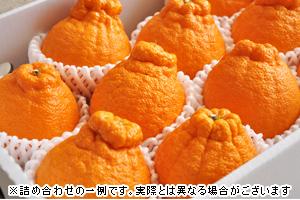 デコポン しらぬひ 和歌山県産
