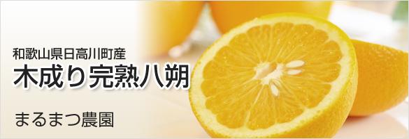和歌山県産 木成り八朔(はっさく)