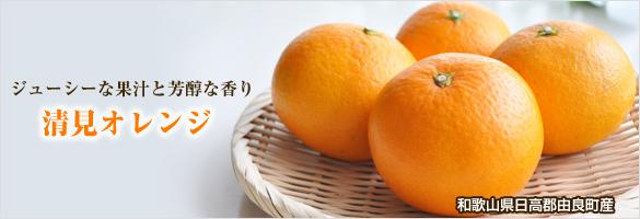 清見オレンジ(清見タンゴール) 和歌山県産