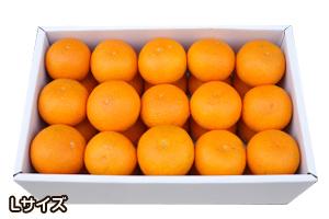 清見オレンジ 和歌山県産 みかん