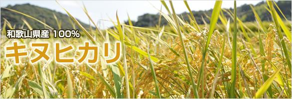 和歌山県産 キヌヒカリ(玄米)
