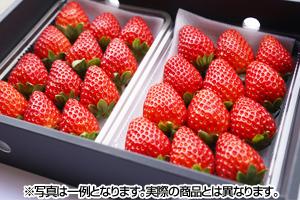完熟いちご まりひめ 和歌山県産