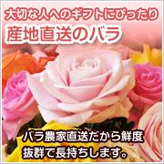 産直のバラ