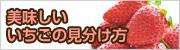 美味しいイチゴ(甘いいちご)の見分け方